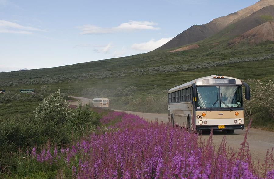Denali Park bus